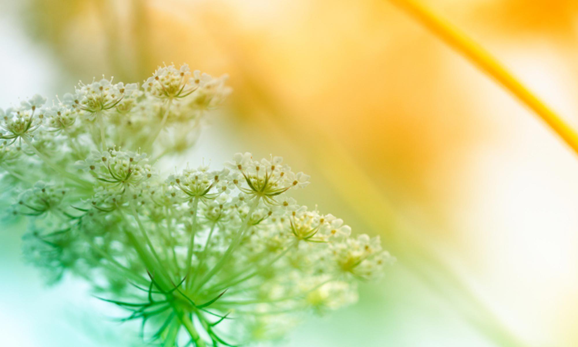 Heilpraxis für ganzheitliche Psychotherapie und Balance